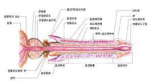 urethra picture 2