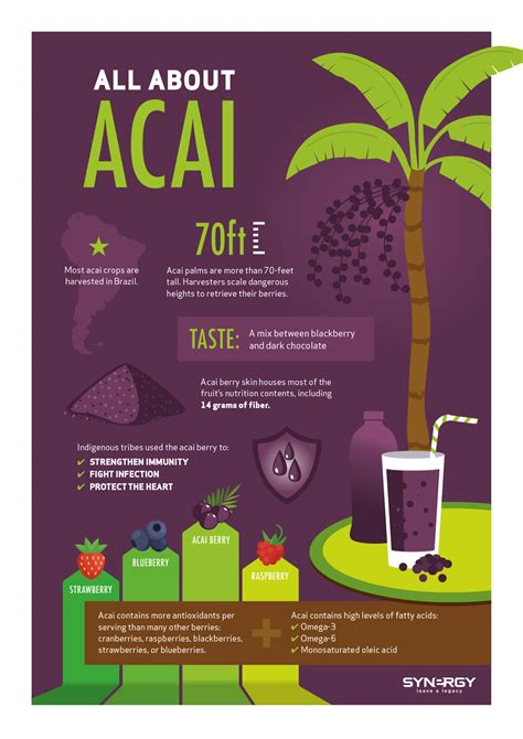 acai berry information picture 13