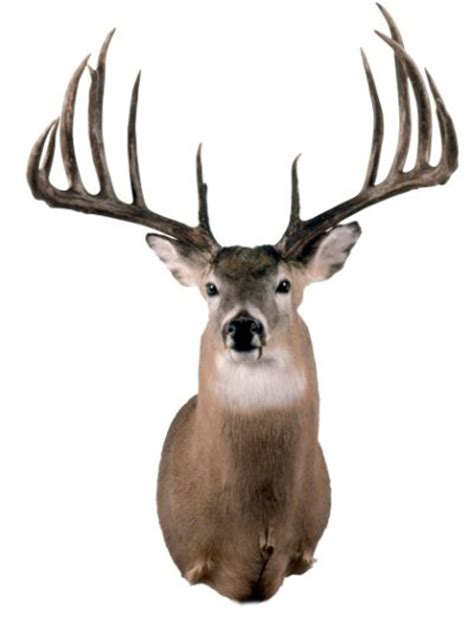 world's largest deer antlers picture 6