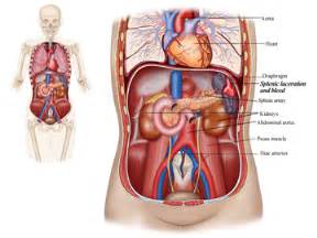 where is the liver located in the body picture 13