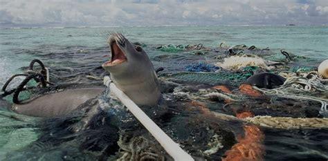 marine debris picture 15