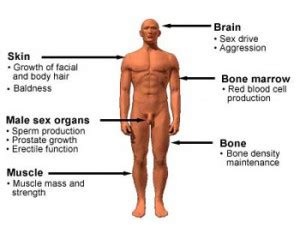 testosterone replacement most common side effects picture 3