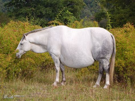 fat and horsing picture 11