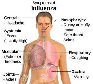 flu symptoms with gastrointestinal symptoms picture 3