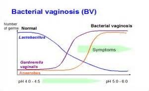 bacterial vaginosis research picture 6