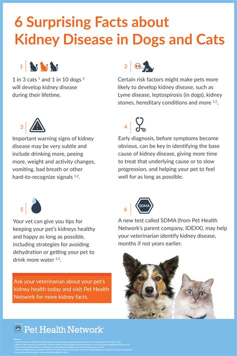 information about bladder diseases in dogs picture 5