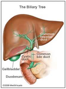 bile duct gall bladder cancer picture 13