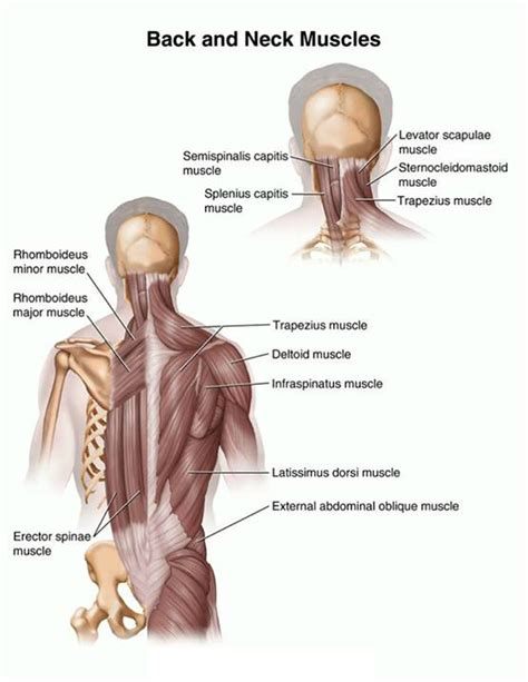 back spasms muscle group picture 11