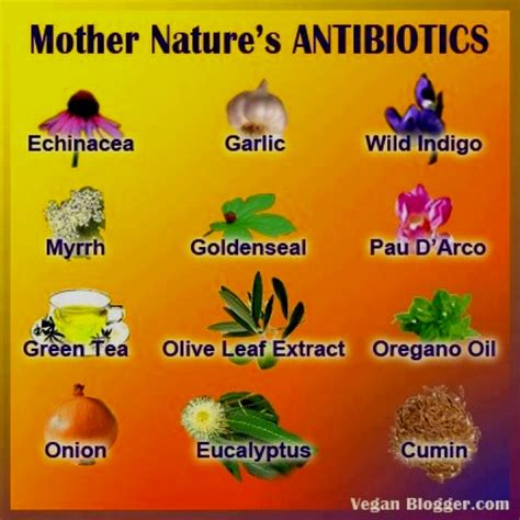 thesis introduction of antibacterial herbal handwash picture 4