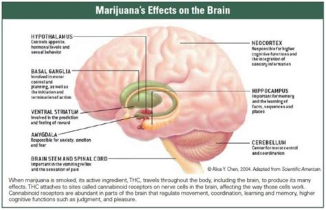 what can marijuana smoke do to a picture 4