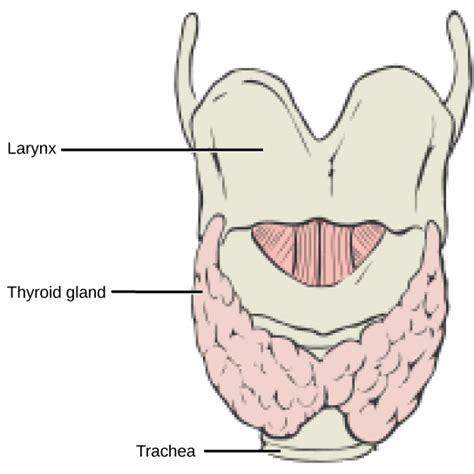 dark fluid in thyroid picture 9