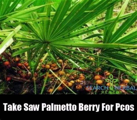 saw palmetto bust growth picture 17