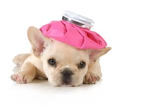 puppies with a bladder infection picture 11