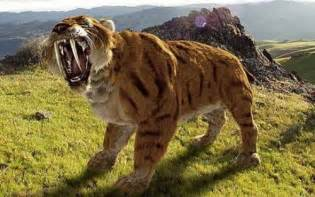 saber tooth tiger picture 6
