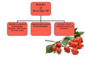 skin creams containing lipids picture 11
