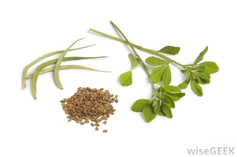 what is fenugreek used for in women picture 5