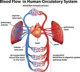 medicine for blood circulation philippines picture 6