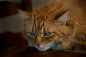 cat has lost appetite picture 15