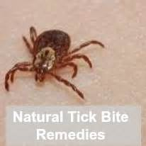herbal remedies for ticks picture 2