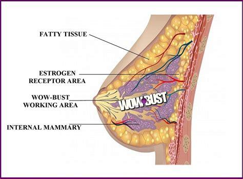 male breast development taking pueraria picture 2