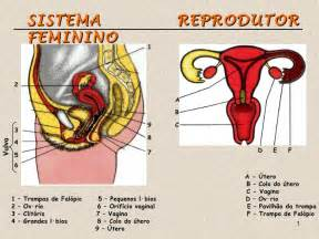 genital picture 6