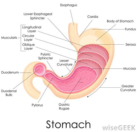 stomach pain what to eat during advocare 24 picture 5
