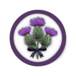 scottish thistle picture 2