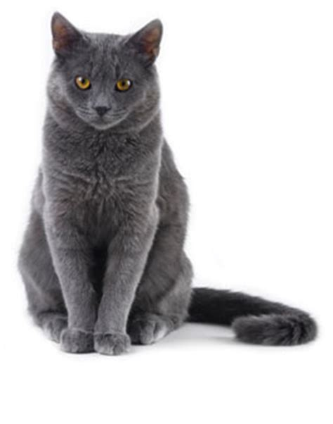 hyperthyroid cats picture 10