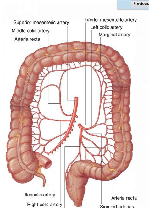 anatomy colon picture 9