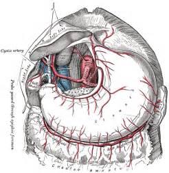 gall bladder & celiac desease picture 7