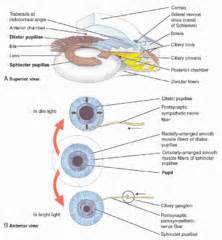 does damage the sphincter muscle picture 7