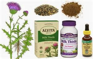 health animal alternative medicine herbs milk thistle picture 6