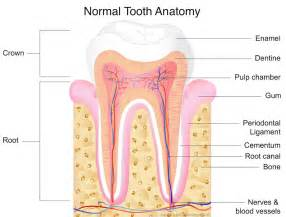 children's normal teeth images picture 3