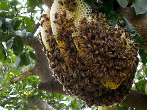 Deviding honey bee hives picture 9