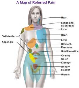 refer pain and gallbladder picture 1