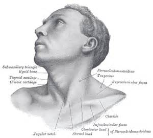 skin growth icd picture 13