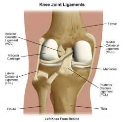 inner knee joint tendon injury picture 5