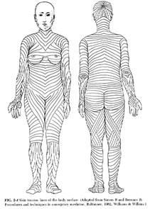 skin line picture 1