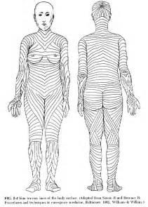 skin line picture 11