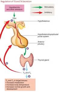 low state thyroid picture 6
