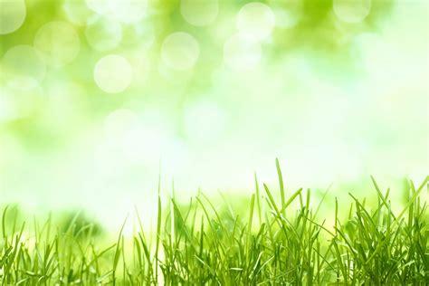 herb diet picture 9