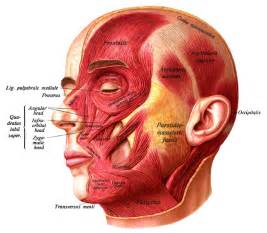 the face inside is right beneath the skin picture 7