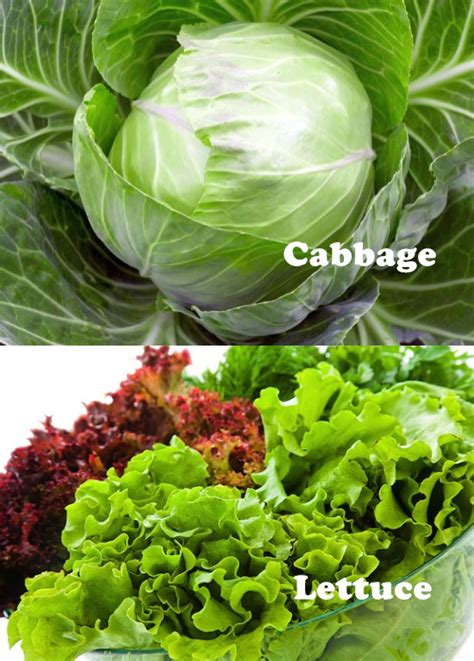 cabbage 20soup 20 diet picture 15