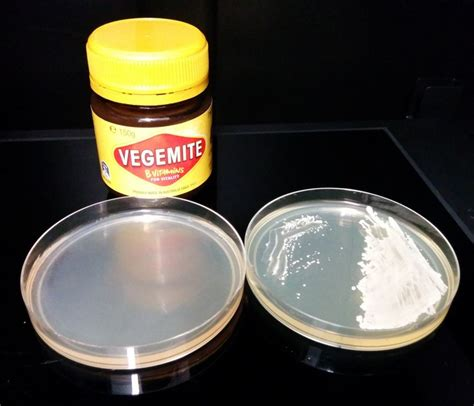 which fruits contain yeast picture 9