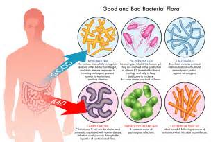 stomach virus bacterial picture 13
