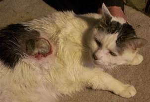 neoplasene with cats picture 2