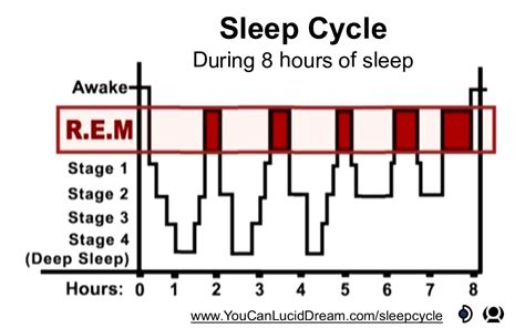 cycles of sleeping picture 14