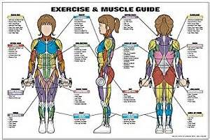 exercising muscle groups picture 14