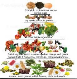 parrot balanced diet fruit picture 6