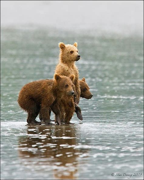 bears and small picture 1